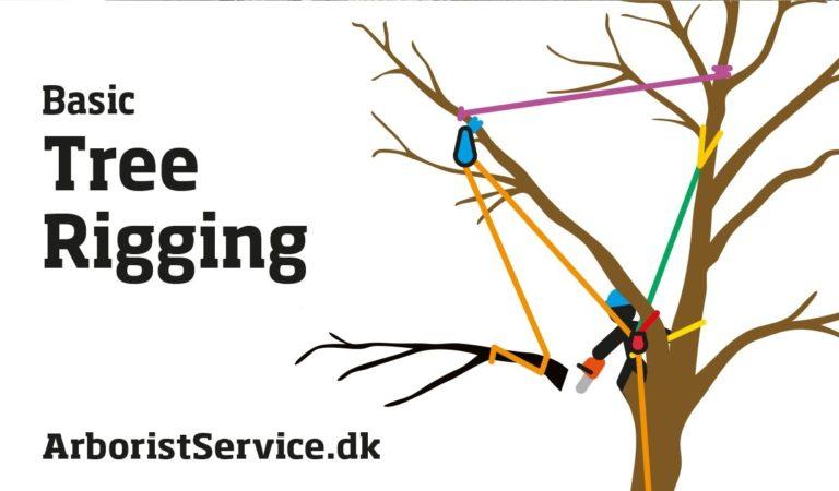 Tree Rigging Techniques – Baum Rigging