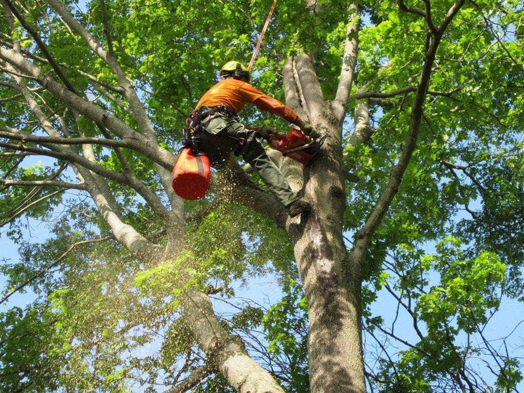 Rico's Tree Service